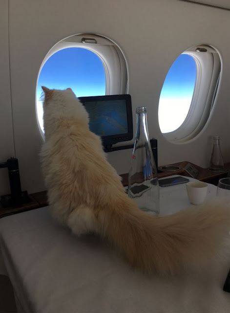 """After his death .. Karl Lagerfeld leaves his fortune for his pampered cat """"choupette"""""""
