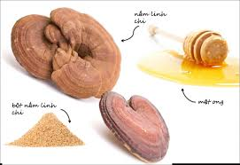 các dạng chế biến nấm linh chi