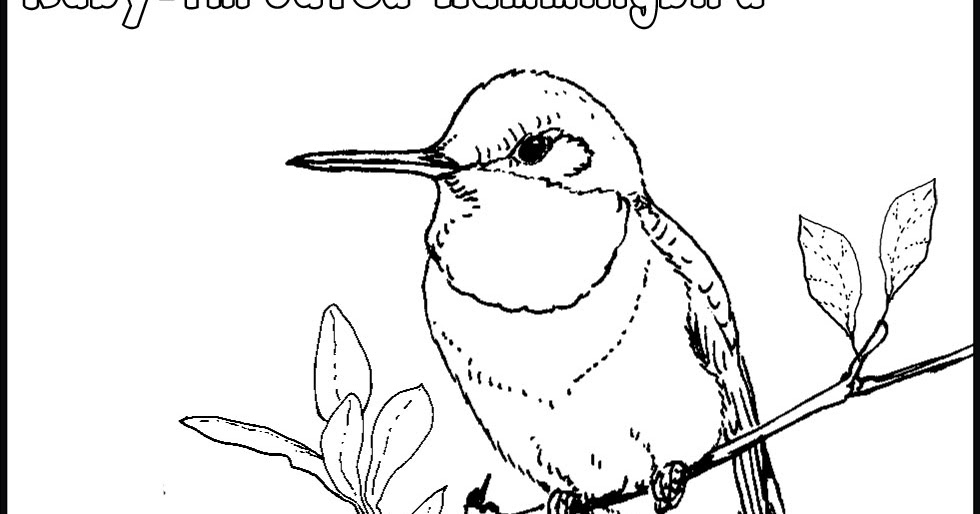 ruby throated hummingbird pages coloring pages