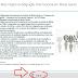 8º ano - Atlas Digital da Migração Internacional em Minas Gerais