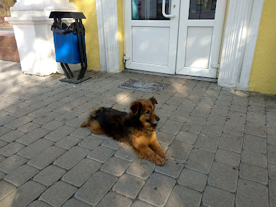 Dog Containment and the Option of an Underground or Buried Wire Fence