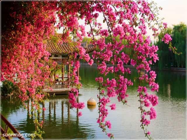 صور خلفيات - خلفيات ورد 13   Wallpapers - Flowers backgrounds 13