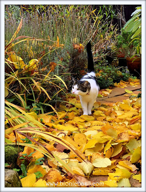 Melvyn's Autumn Adventure ©BionicBasil® The Sunday Selfies