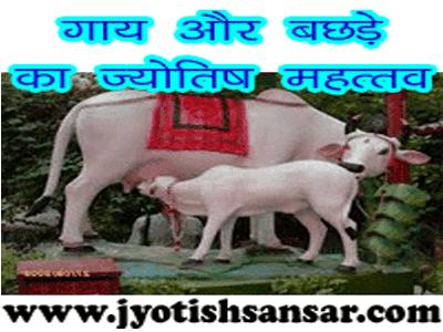 Gaay Aur Bachde Ka jyotish mahattw in hindi jyotish