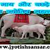 Gaay Aur Bachde Ka Jyotish Mahattw