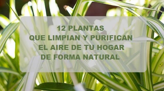 12 plantas que limpian y purifican el aire de tu hogar - Plantas de interior purificadoras del aire del hogar ...