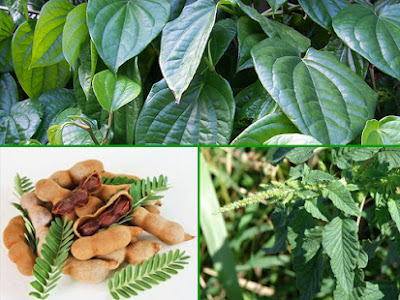 Obat Herbal Dari Bahan Alami