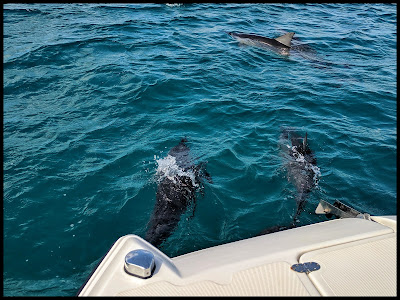 Pod of Dolphins off Kauai Coast