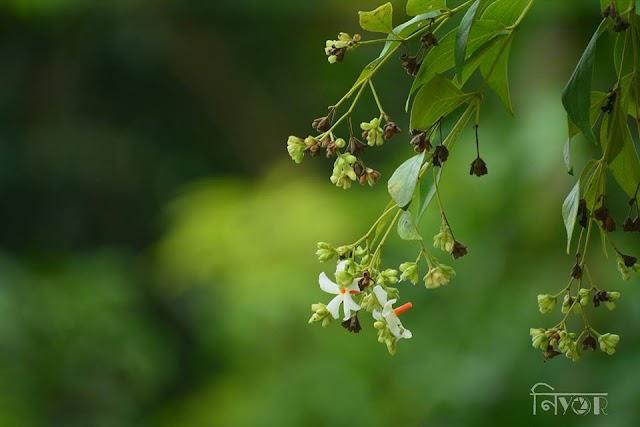 পুৱাই মৰহি যায় যৌৱন, | Assamese Status