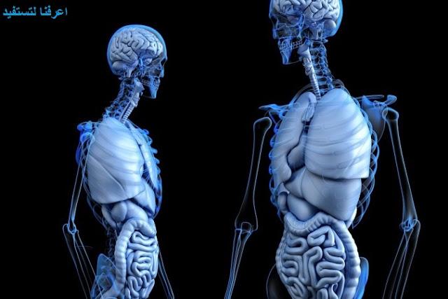 معلومات عن أجزاء جسم الإنسان