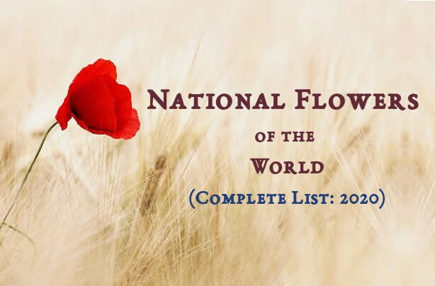 National Flowers of the World