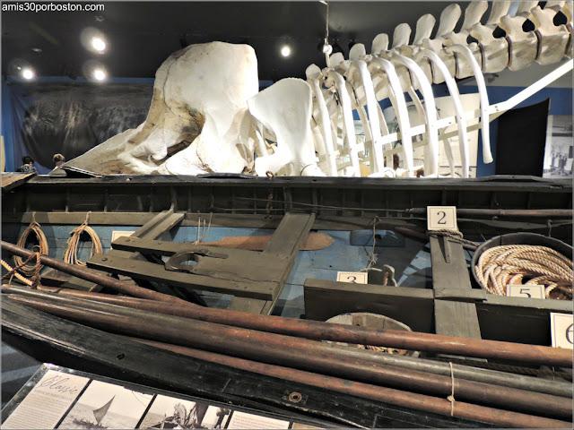 Esqueleto en el Museo de las Ballenas de New Bedford en Massachusetts
