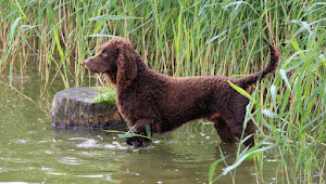 These Dog Breeds (and Cat Breeds) Love to Swim