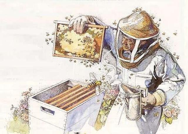 Ημερίδα μελισσοκομίας στην Αρναία Χαλκιδικής