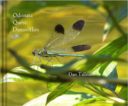 NEW  EDITION: Damselfly pdf $9.99. Also other formats. Click cover image.