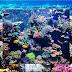 Ekosistem Terumbu Karang, Fungsi dan Manfaat Adanya Terumbu Karang