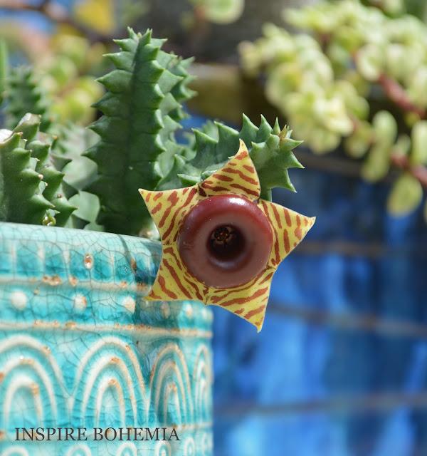 Huernia zebrina succulent flower - Designer Cactus and Succulent Planters Garden Design Inspire Bohemia - Miami and Ft. Lauderdale Succulent Business