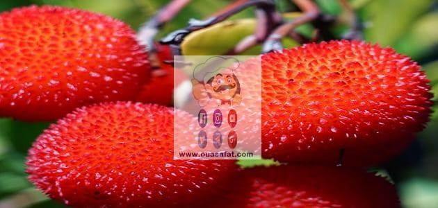 فوائد واستخدامات فاكهة اللنج