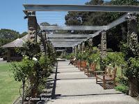 Rows of climbing roses - Royal Botanic Gardens, Sydney, Australia