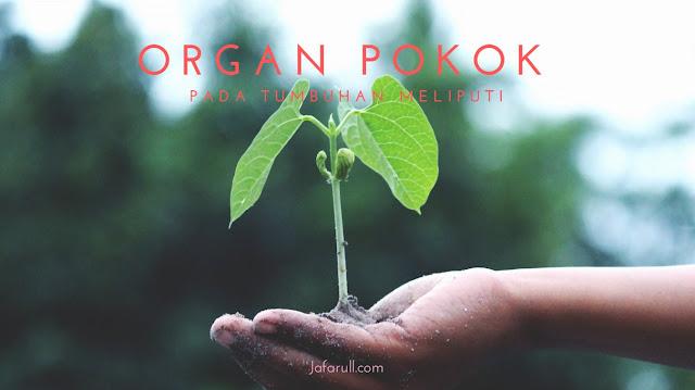 Organ Pokok pada Tumbuhan Meliputi