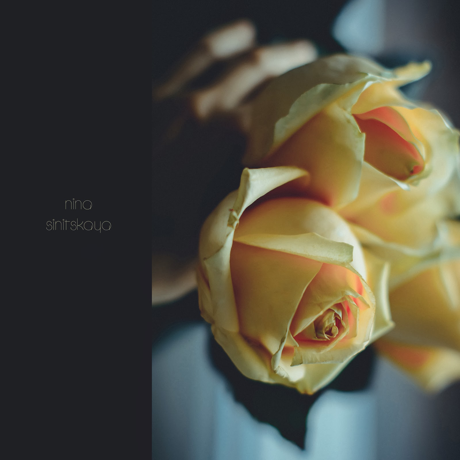 Floral Photography. Peach roses on the dark background. Soft focus and dreamy look