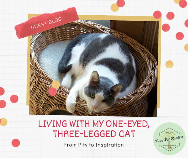 Guest blog: Living with My One-Eyed, Three-Legged Cat