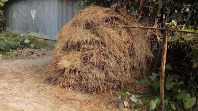 Rice Straw picture