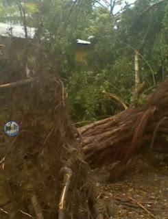 Huracán Irma derriba arboles en Puerto Plata