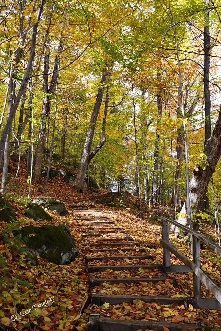 feuilles-escalier-automne