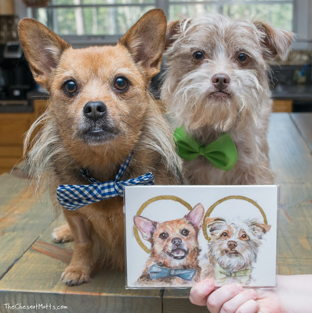Mini Review: Vicki Liu Pet Portraits