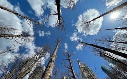 Ένας «δάσος-φάντασμα» από τη Maya Lin στο Μανχάταν