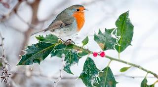 5 ianuarie: Ziua Păsării