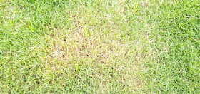why is my grass turning yellow