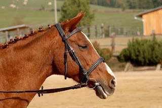 Chestnut horse wearing a bridle standing in an outdoor riding school.
