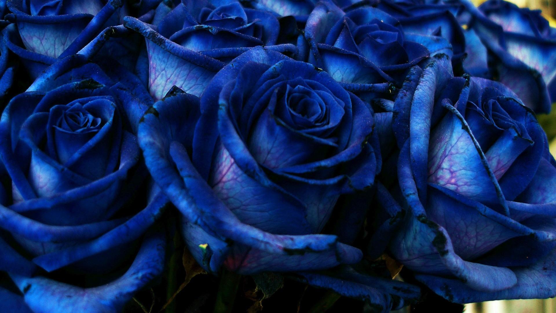 blue roses bouquet HD Wallpaper