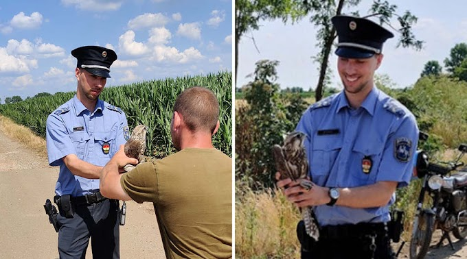 Bajba jutott kerecsensólymot mentettek meg a rendőrök Hajdúböszörménynél