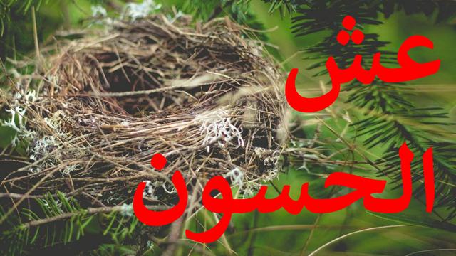 عش طائر الحسون المناسب للإنتاج