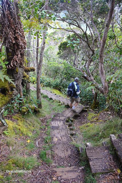 alakai swamp kauai hawaii trailblazerhawaii