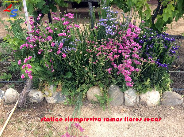 ramos ramilletes de flores secas statice siempreviva
