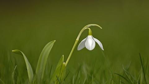 Most akkor tényleg berobban a tavasz? Hétfőn már tutira nem kell a télikabát: mutatjuk, hány fok lesz!
