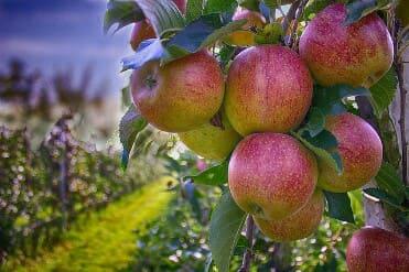 14 Khasiat Sehat Luar Biasa Dari Buah Apel