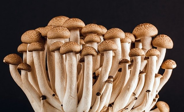 Mushroom Farming at Home for Profitability