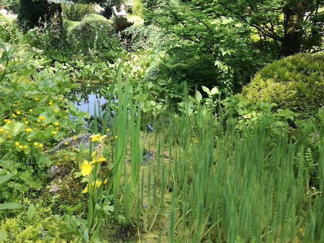 naturalistyczne oczko wodne, leśna sadzawka