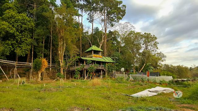 Hiking 5 km vào Bàu Sấu, khu rừng ngập mặn trong rừng Nam Cát Tiên