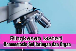 Ringkasan Materi Tentang Homeostatis Sel, Jaringan dan Organ