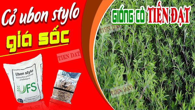Bảng giá bán hạt giống cỏ ubon stylo - cỏ họ đậu