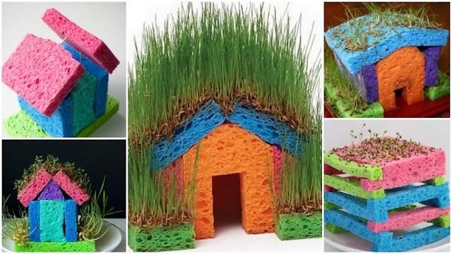 Κηπουρική για παιδιά: Φύτεμα Σπόρων σε Σφουγγάρι