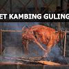PAKET KAMBING GULING