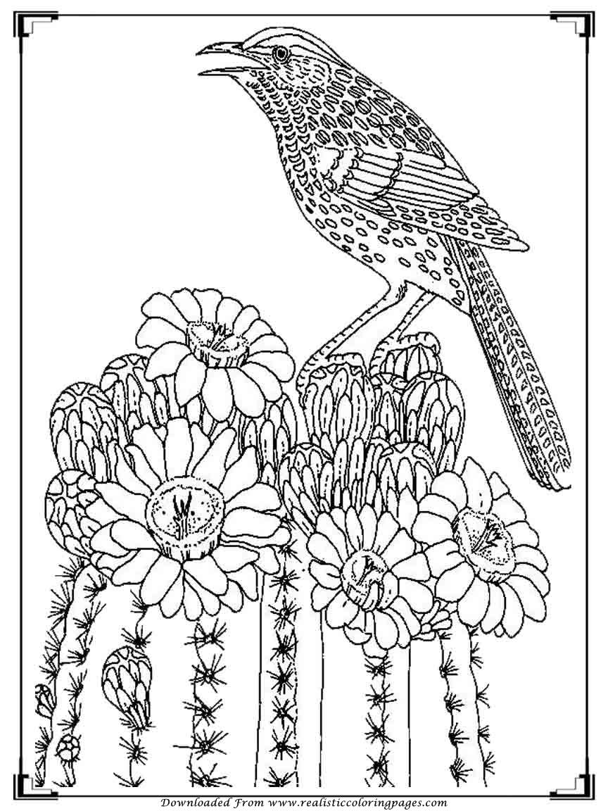 Printable birds coloring pages for adults realistic for Coloring page of a bird