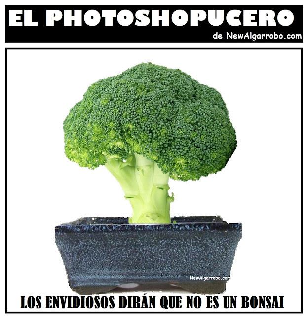 brocoli vs bonsai